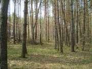 земельные участки в Ходосовке